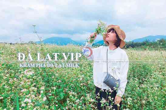 Tour Đà Lạt Milk, Khám Phá Vườn Hoa Lavender, Cẩm Tú Cầu, Cổng Trời 'Linh Quy Pháp Ấn