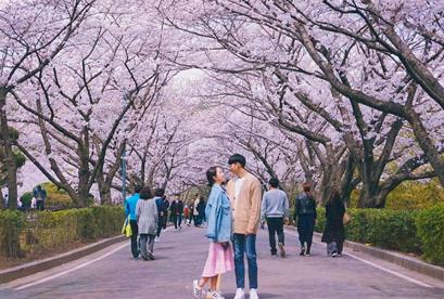Tour Hàn Quốc 2019 Đảo Jeju – Love Land – Seoul – Nami – Running Man