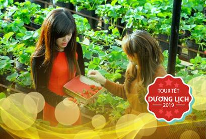 Tour Đà Lạt Tết Dương Lịch, Vườn Hoa Cẩm Tú Cầu, Đồi Chè Cầu Đất, Cổng Trời 3N2D