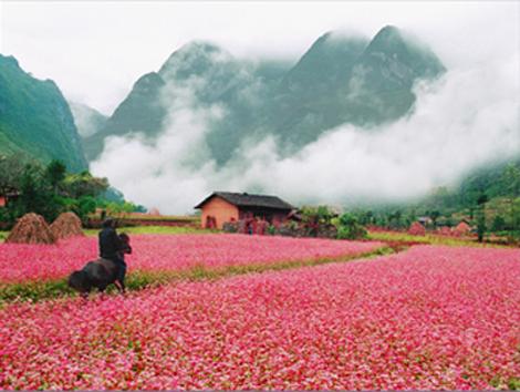 Tour du lịch Hà Giang với chi phí rẻ nhất, chất lượng nhất