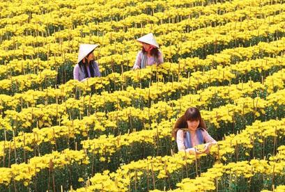 Tour Tham Quan Làng Hoa Sa Đéc Mùa Tết